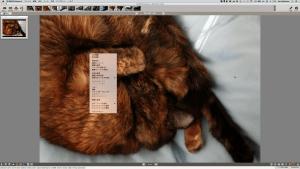 スクリーンショット 2015-01-17 11.30.40(2)