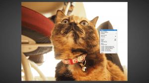 スクリーンショット 2015-01-17 11.05.49(2)
